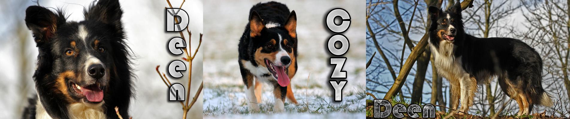 Cozy has been mated to Deen