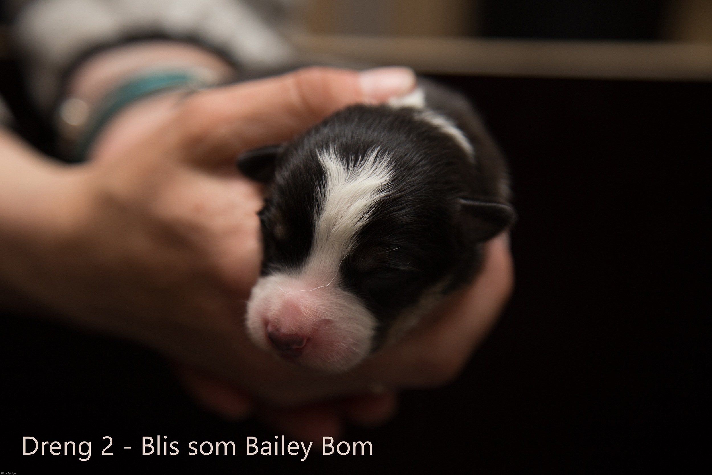 2D Bailey Bom Blis - Dreng 2